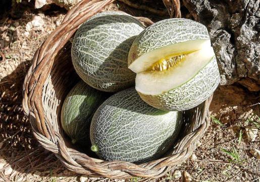 El 'meló eriçó' debe su nombre a la similitud de su piel con el caparazón de un erizo de mar sin espinas.