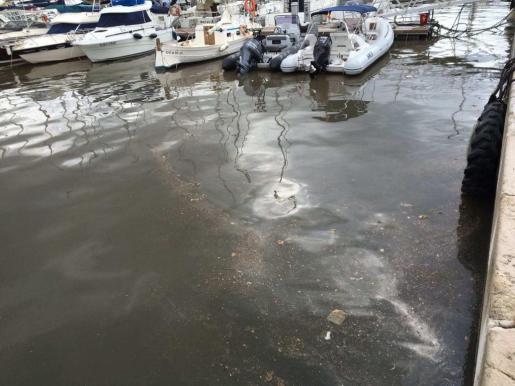 Restos fecales flotando ayer por la mañana en el puerto de Ibiza.