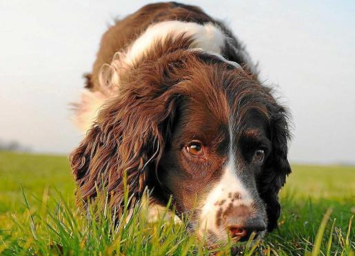 Parásitos internos caninos y el peligro para su salud-