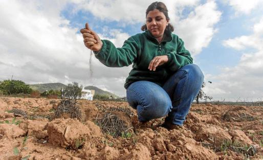 Alicia Morales, técnico de agricultura de la Cooperativa Agrícola de Sant Antoni.