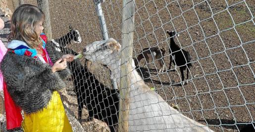 Uno de los principales alicientes de la jornada de ayer en Can Musón fue el que los niños pudieran ver de cerca todos los animales.