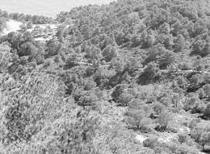 El joven francés desapareció por la zona de cala Llentrisca, en el municipio de Sant Josep. Foto: GERMAN G. LAMA