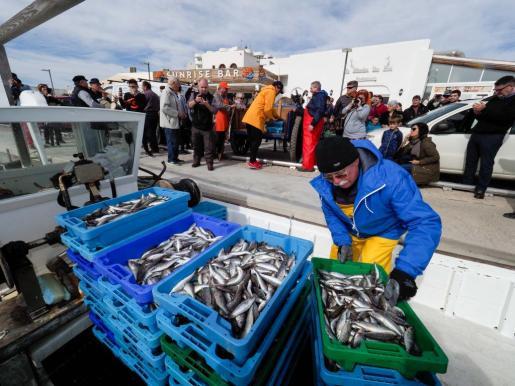 Los pescadores descargan en el puerto de Santa Eulària las cajas de 'gerret' recién pescadas en un llaüt.