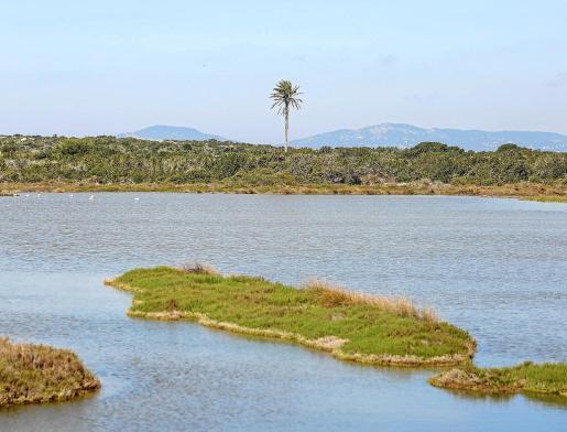 Imagen de archivo del islote de S'Espalmador.