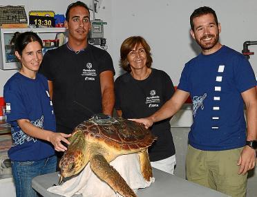 Lasi (arriba) y Cannoli (abajo) fueron tratadas en el Palma Aquarium tras sufrir dificultades en el mar.