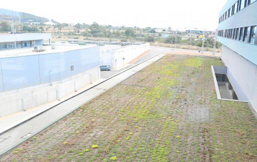 Imagen de la cubierta vegetal que se acabará retirando.