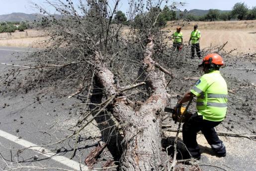 Un operario corta una de las ramas del pino.