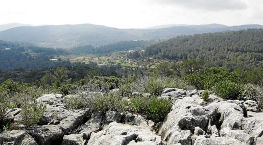 Zona boscosa de es Amunts, en el noroeste de la isla de Ibiza, en una imagen de archivo.