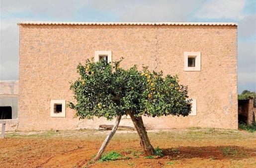 La fotografía 'Be like Wes Anderson' (Sé como Wes Anderson) ha sido tomada en una granja de Corona por Magdalena de Jonge Malucha.