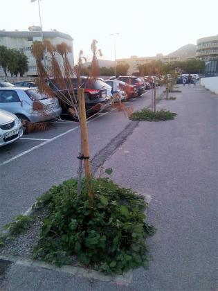 Imagen de los árboles situados en Can Misses.