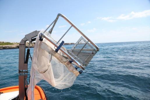 Recogidas 2,6 toneladas de residuos del litoral de las Pitiusas en el mes de agosto.