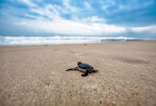 No consta si la afectada es turista o residente ni el tamaño del reptil.