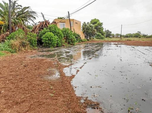Imagen de los vertidos fecales en los campos de ses Salines el pasado mes de agosto.