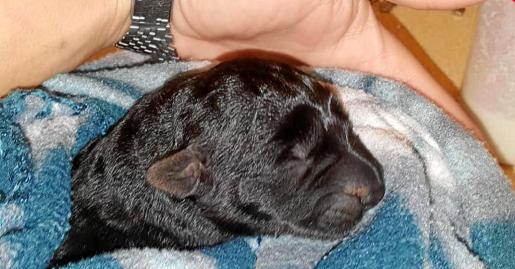 Imagen del único cachorro que sobrevivió y que fue rescatado del interior del contenedor donde fue abandonado junto a los otros cinco ejemplares.