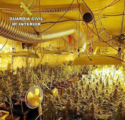 Las plantas fueron descubiertas en el interior de una vivienda en ses Salines.