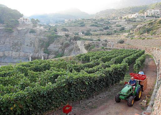 Los payeses podrán ofrecer hasta seis plazas turísticas en sus terrenos agrícolas.