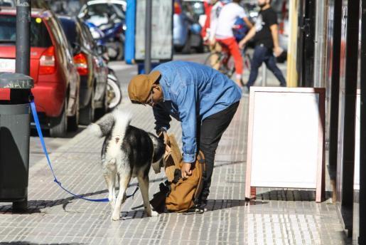 Imagen de archivo de un perro con su dueño