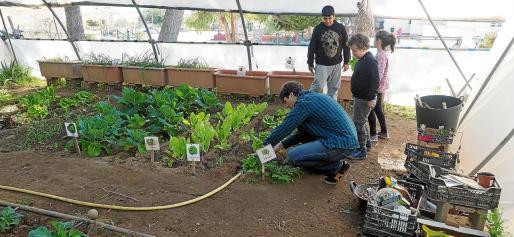 El coordinador ambiental del centro, Toni Marí, realiza el taller de cuidado del huerto con algunos alumnos.
