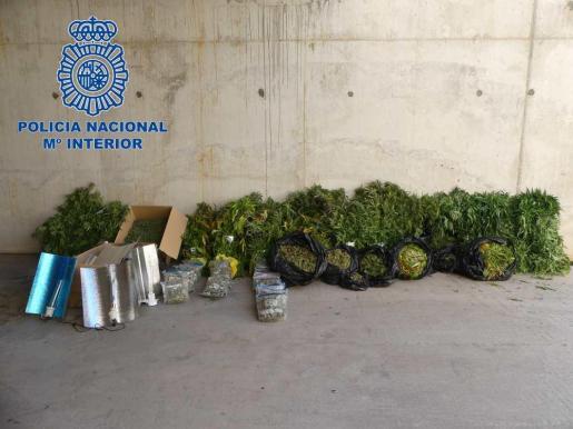 La Policía Nacional desmantela una plantación de marihuana dentro de un antiguo almacén en Ibiza.