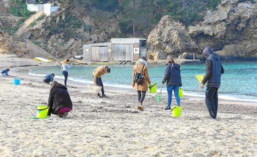Los voluntarios recogieron más basura ayer en Cala Vedella que hace unas semanas en la playa de es Cavallet.