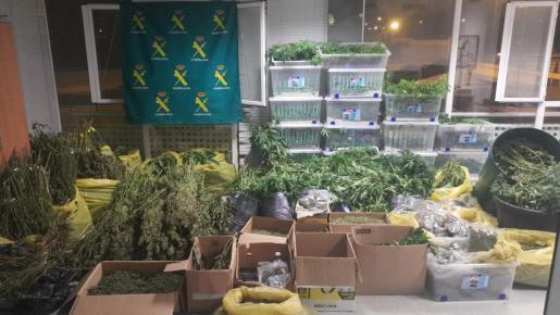 La Guardia Civil desmantela un laboratorio con más de 3.600 plantas de marihuana en Ibiza.