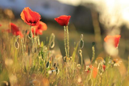 Flores que brotan desde el suelo.