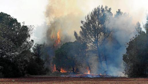 Los helicópteros del Ibanat realizaron varias descargas en los puntos del incendio cogidos a la masa forestal.