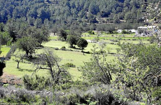 Zona agrícola y forestan en es Rafal Trobat, en Sant Jordi.