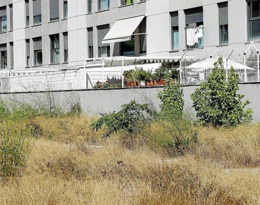 El solar abandonado detrás de las terrazas del edificio Es Pla de Vila.