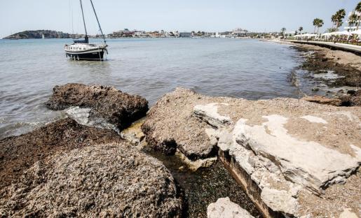 Los restos de posidonia cubrían ayer por completo las rocas bañadas por el mar.