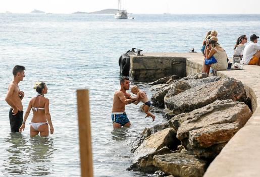 Las recientes obras del paseo de Ses Figueretes han propiciado la presencia de estos animales en la playa
