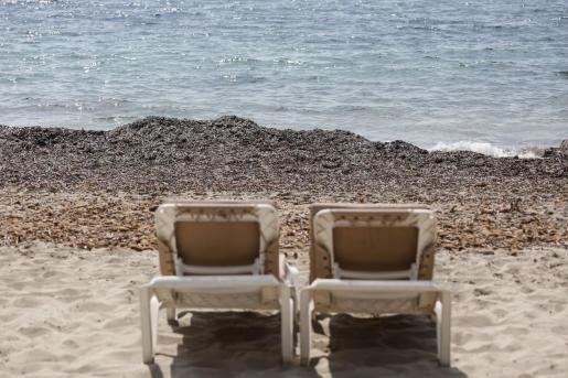 La posidonia acumulada en la orilla es un fenómeno bastante frecuente en muchas playas de Baleares. Imagen de Platja d'en Bossa este mismo verano.