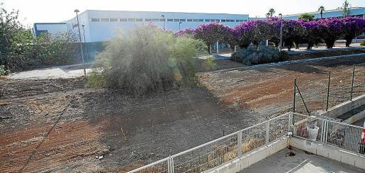 El solar en es Raspallar que ha limpiado el Ayuntamiento de Eivissa.