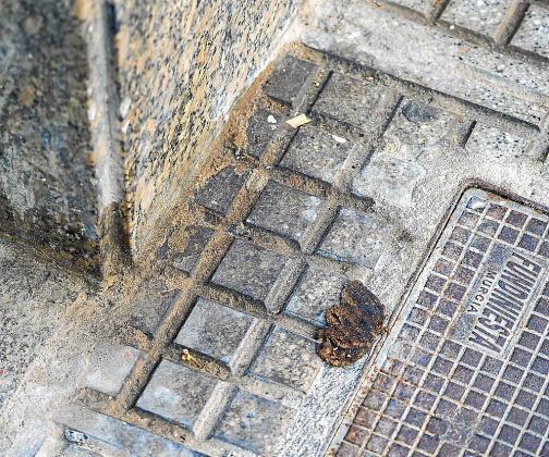 Aceras de la zona de la calle Vicente Serra i Orvay con excrementos de animales durante el día de ayer.