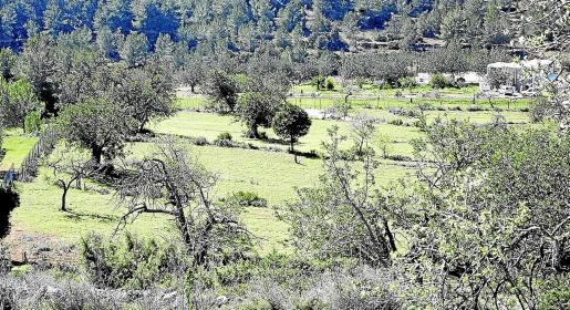Imagen de archivo de la zona de es Rafal Trobat, en Sant Jordi.