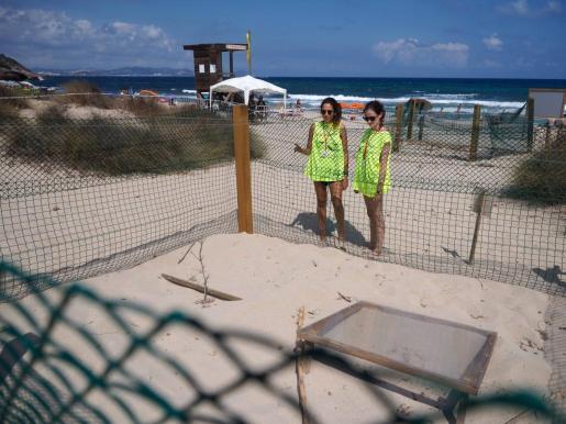 Marta y Marina supervisan el perímetro y realizan una labor informativa sobre el desove de las tortugas y las características de la especie en la playa de es Cavallet.