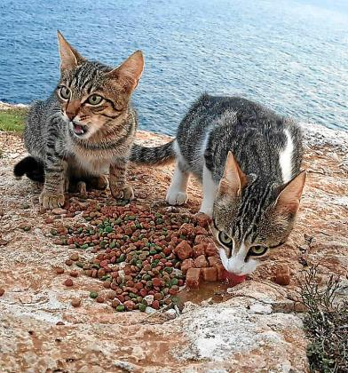 Según denuncia la protectora, «los gatos abandonados encontraron cobijo entre los cantilados, en una zona bastante peligrosa.