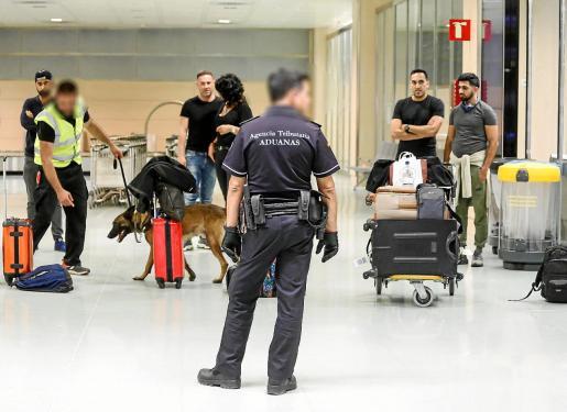 Mediante el uso de perros adiestrados, los agentes tratan de detectar sustancias estupefacientes escondidas en el equipaje.