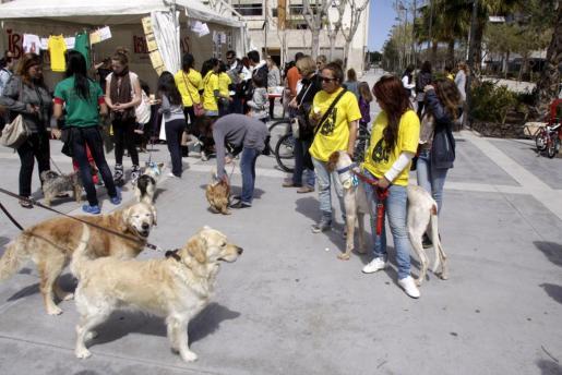 El bulevar Abel Matutes acogió una nueva jornada de adopción responsable de la Asociación Ibiza4patas