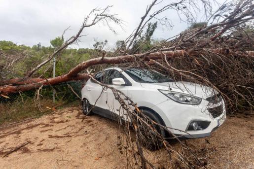 Un árbol cae sobre un coche en Sant Antoni.