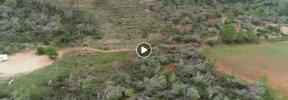 Un dron graba los daños del cap de fibló en Sant Antoni