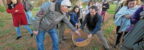 El cultivo y venta de azafrán de Ibiza resurge con los agricultores jóvenes