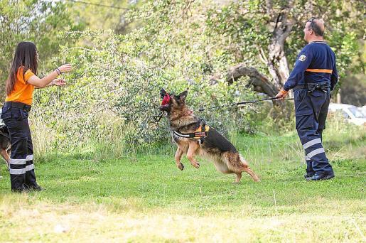 Turco, Ada y Duna hicieron varios ejercicios de búsqueda de personas durante la jornada de convivencia de Protección Civil que se celebró ayer en la localidad de Forada.