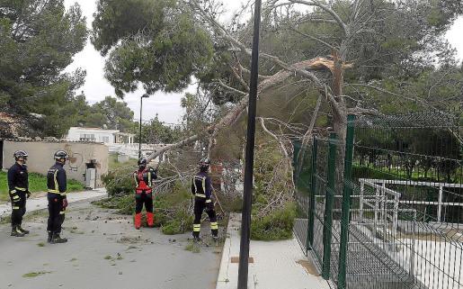Retirada de un árbol caído en la calle.