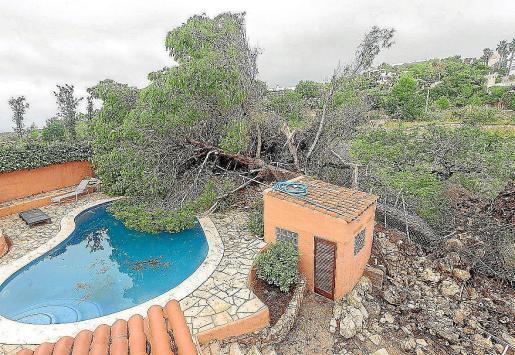 Medi Ambient elevó a 100.000 el número de árboles caídos.
