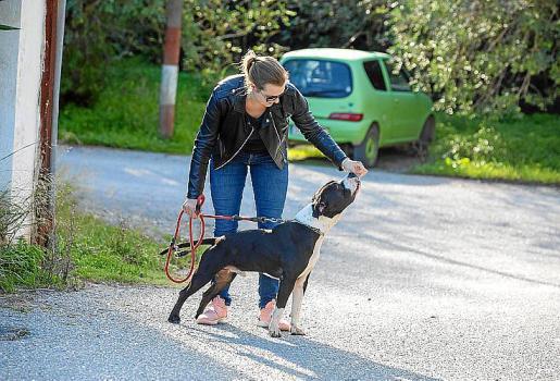 Algunos de los perros allí encerrados sonde razas potencialmente peligrosas. Para tenerlos se requiere una licencia que sale gratis si se adopta en el centro de sa Coma.