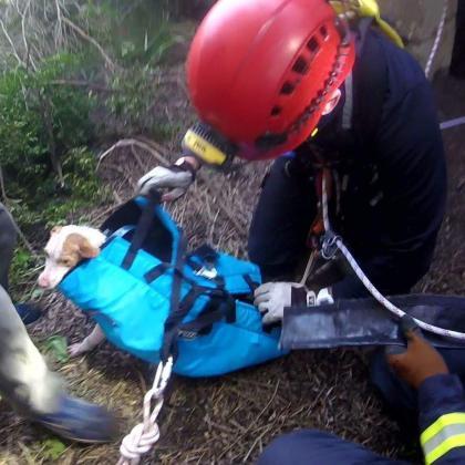 Momento en el que rescatan a un perro que se había caído en un pozo.