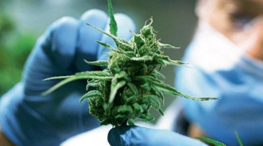 En la Unión Europea 91,2 millones de ciudadanos reconocieron haber consumido cannabis alguna vez en su vida.