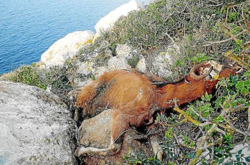 El Consell d'Eivissa quiere evitar que se produzca otra «actuación traumática» como fue la matanza de 2016.