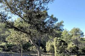 El Govern subvenciona la limpieza de los bosques para evitar incendios